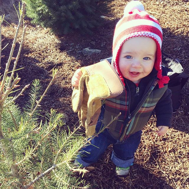 found the perfect tree, ready to help daddy cut it down!