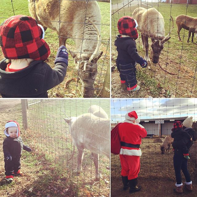 a magical morning with Santa and his reindeer! ?